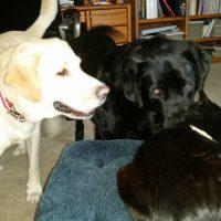 Buddy, Midas, and Cheeto-2