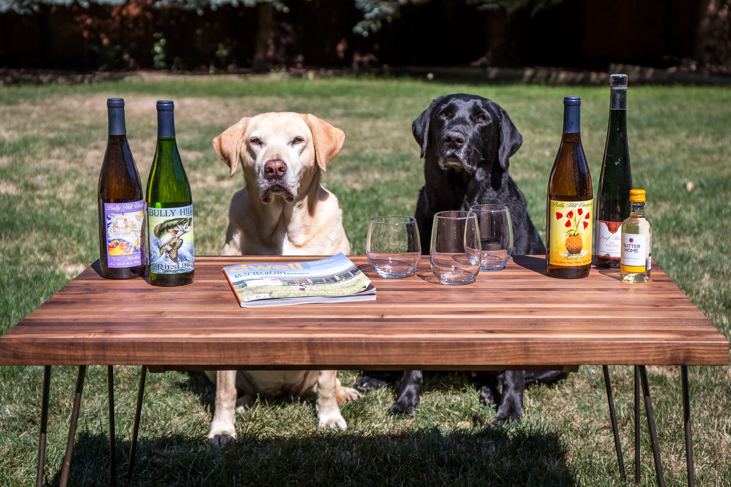 wine-and-wags