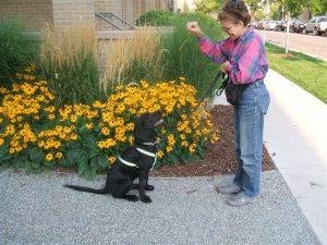 photo-dog-training